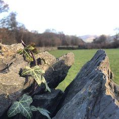 https://flic.kr/p/rUoogu | Peering over a rock fence in the Yorkshire dales - pretty :) #upsticksandgo #yorkshiredales #rockfence #ukcountry #travel #travelgram #cumbria #travellingtheworld #michfrost