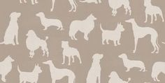 Osborne & Little Wallpapers Best in Show W6181/01