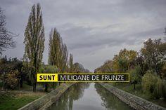 SUNT MILIOANE DE FRUNZE