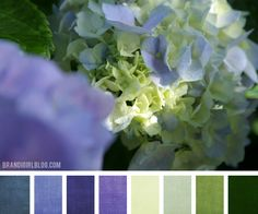 Blue Hydrangea color palette with green and off-white shades