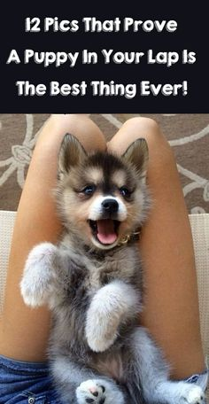 OMG I almost died from the first one!! http://theilovedogssite.com/12-proofs-that-a-puppy-in-your-lap-is-the-best-thing-ever/