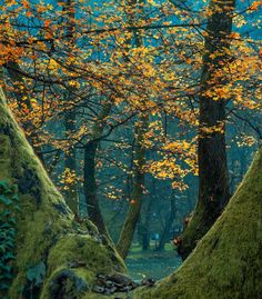 Trees by the Bosna River by Mevludin Sejmenovic Photography