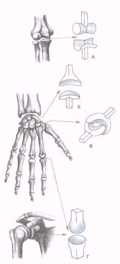 Soleus Origin fibula, medial border of tibia (soleal line) Insertion ...