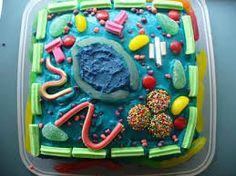 edible plant cell model