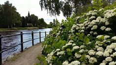 Beautiful river!