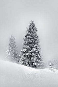 Fifteen Feet of Pure White Snow by Mary Kay, via 500px