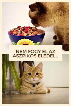 Macska | Cica | Étel | Macskaeledel | Cicaeledel Dog Food Recipes, Marvel, Dogs, Dog Recipes, Doggies, Dog