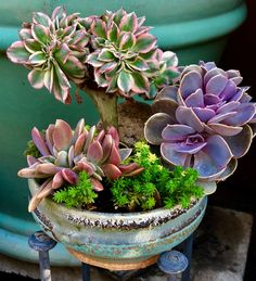 Succulent Care, Succulent Pots, Cacti And Succulents, Planting Succulents, Cactus, Air Plants, Garden Plants, Growing Blueberries, Dish Garden