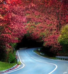 Tree Tunnel, Biscay, Spain  photo via maduh