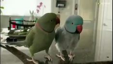 They are having a full conversation all to themselves. We're going to need a translator. Funny Birds, Cute Birds, Cute Funny Animals, Cute Baby Animals, Cute Dogs, Crazy Funny Videos, Funny Animal Videos, Parrot Gif, Talking Parrots