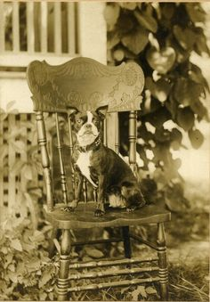 1930s (?) Boston Terrier, via eBay