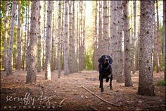 Scruffy Dog photography knows what they are doing. I want my pets portrait-ed...