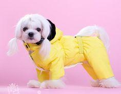 Комбинезон Радуга желтый для девочек. Комбинезоны для собак. Одежда для собак