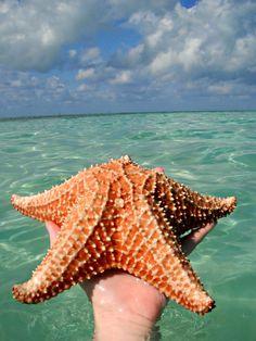 Starfish on Cayo Largo Del Sur, Cuba. #luxlifeincuba #wanderlust #bucketlist #travel