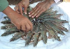 Ngành tôm thế giới: Phía sau tín hiệu lạc quan | Vietnam Aquaculture Network - Mạng Thủy sản Việt Nam