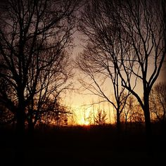 """Sunrise this morning in Utrecht #sunrise #sun #nature #netherlands #utrecht #trees #sky"""