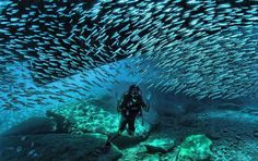 Today's daily adventures images 10 cool scuba diving images to make you wish you were underwater now!