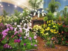 We can grow amazing orchids under the shade of a tree year round in South FL.  Slide show.