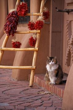 El Gato, Old Town  Albuquerque. Pueblos, wooded ladder, chili peppers, and a cat in the doorway.