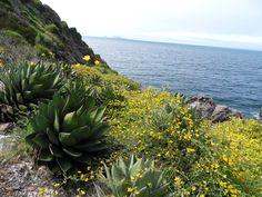 Spring 2011, Ensenada, Baja California.