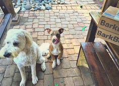 Tino & Grumps Get a BarkBox! – Simply Taralynn