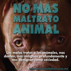 No mas maltrato animal!!