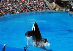 Blog: What Will SeaWorld Do? Four Potential Moves | SaveJapanDolphins.org