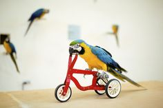 And This Parrot Is Paying For Med School By Teaching Spin Classes | 15 Animals Who Are Behaving Like People