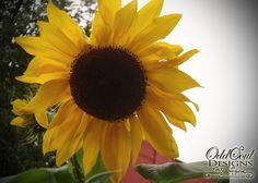 Color Magic: Yellow   #sunflower