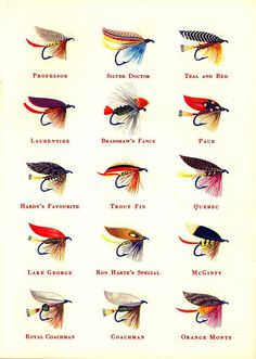 Sportsman Cigarette Fishing Flies, 1950s, I have lot's of race horses, will have to collect the flies