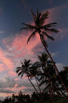Kihei Tropical Sunset Art Print by Pierre Leclerc Photography. All prints are professionally printed, packaged, and shipped within 3 - 4 business days. Choose from multiple sizes and hundreds of frame and mat options. Strand Wallpaper, Beach Wallpaper, Summer Wallpaper, Iphone Background Wallpaper, Tree Wallpaper, Wallpaper Quotes, Aesthetic Pastel Wallpaper, Aesthetic Backgrounds, Aesthetic Wallpapers