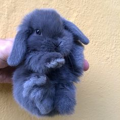 Fluffy Animals That Are Cuddlier Than a Plush Toy Baby Animals Super Cute, Cute Baby Bunnies, Cute Little Animals, Cute Little Things, Cute Bunny Pictures, Baby Animals Pictures, Fluffy Animals, Animals And Pets, Animal Room