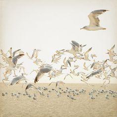 Birds in Flight by K.Hurley, via Flickr