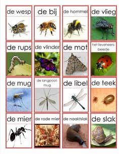 kriebelbeestjes memorie Learn Dutch, Insect Hotel, Dutch Language, Folder Games, Montessori Materials, Elementary Science, Fauna, Science And Nature, Preschool
