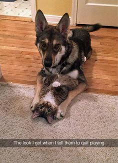 Do you have Dog and Cat who are awesome buddies? If yes click the image, Fill in the gaps and let us show this adorable relationship! #photocontest #giveaway