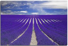 Vanishing Smell, from the lavender fields of southern France ;)