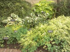 Ripley Garden, Washington DC. Great mix of shade plants.