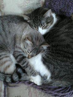 Love my kittens <3