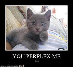 You perplex me. I like it.