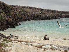 VIAJANTE VIRTUOSO: Galápagos - Equador