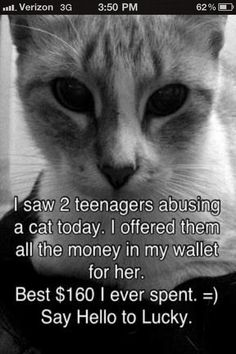 i saw 2 teenagers abusing a cat today.  i offered them all the money in my wallet for her. best $160 i ever spent. say hello to lucky