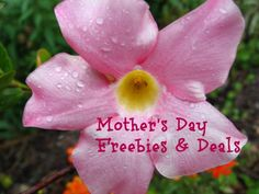 Mother's Day Freebies and Deals - Thrifty Jinxy