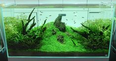 Nature Aquariums and Aquascaping Inspiration - craft of aquascaping is landscape gardening underwater, involving the creation of aquatic plant, driftwood and rock arrangements, including cavework.