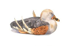 Duck painting  PRINT of watercolor painting  5 by by LouiseDeMasi