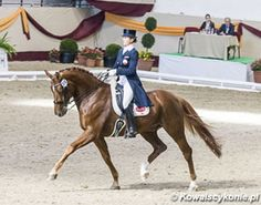 GK Horses Acquires Darius Rubin for Cesar Parra | Eurodressage
