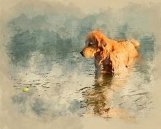 This is an 8x10 printable watercolour artwork of a golden retriever looking for his ball in the water. His name is Sancho :) The file(s) you receive in this purchase are ready to be printed at home, a local print shop or an online printing service (e.g., Shutterfly, Snapfish).