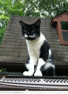 The cat with a handlebar mustache Cute Cats And Kittens, I Love Cats, Cool Cats, Crazy Cats, Image Chat, Pretty Cats, Beautiful Cats, Here Kitty Kitty, Tuxedo Cats