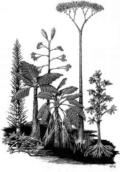 Fig. 1.3.8.1 Reconstructed growth habits of reproductively mature, selected Late Carboniferous coal-swamp plants. From left to right: a calamite tree; a scrambling cordaite; the tree fern Psaronius; the polycarpic lycopsid tree Diaphorodendron scleroticum; the seed fern Medullosa; the monocarpic lycopsid tree Synchysidendron resinosum; a mangrove cordaite tree. Maximum height is greater than 30 m. (Drawing by Mary Parrish.)