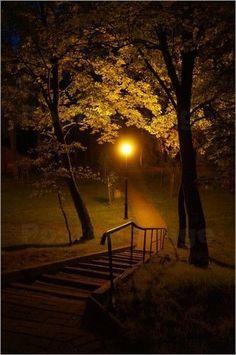 Poster / Leinwandbild Park Nachtaufnahme - ANOWI