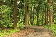 You don't always need to go all the way out to the North Shore to get a nice hike in. Check out some of these trails in the Surrey and Langley areas. Valley Park, Best Hikes, North Shore, Surrey, Hiking Trails, To Go, Walking, Trees, Adventure